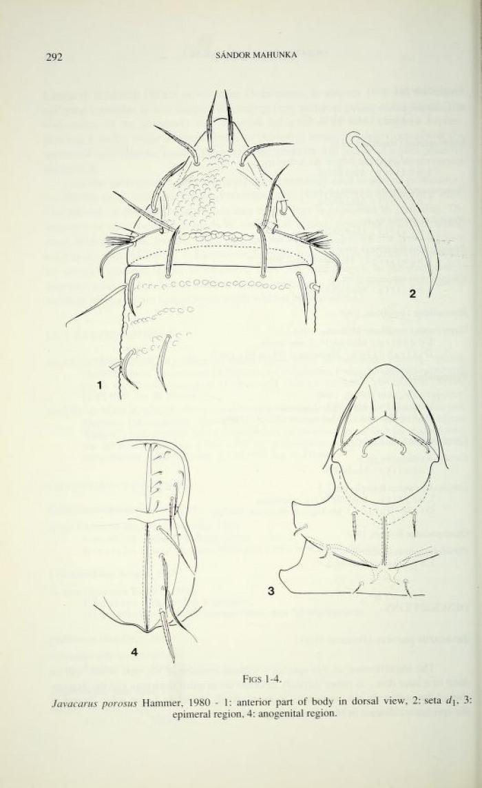 oribatids from madagascar i  (acari: oribatida)  new and interesting mites  from the geneva museum lxxvi